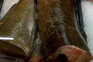 Το νεκρό ψάρι… ζωντάνεψε