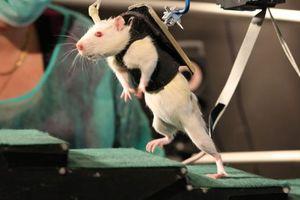Δημιουργήθηκαν για πρώτη φορά ωάρια πειραματόζωων από βλαστικά κύτταρα
