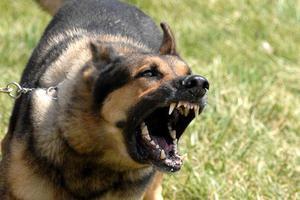 Φονικές ασθένειες που μεταδίδονται από τα ζώα