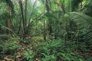 Μέχρι το 2100 θα ξέρουμε όλα τα είδη ζώων και φυτών