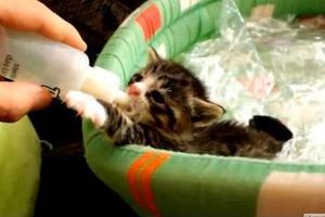 Το πιο γλυκό γατάκι που έχετε δει ποτέ