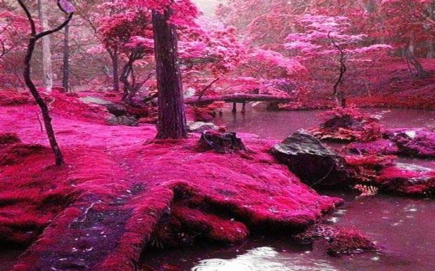 Περιμένοντας το ροζ θαύμα της φύσης