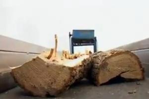 «Οι Έλληνες καίνε τα δέντρα τους για να ζεσταθούν»