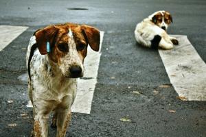 Συγκέντρωση υλικών καθημερινής ανάγκης για αδέσποτα ζώα στη Θεσσαλονίκη