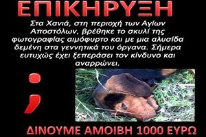 Τον επικήρυξαν με 1.000 ευρώ για κακοποίηση σκυλιού