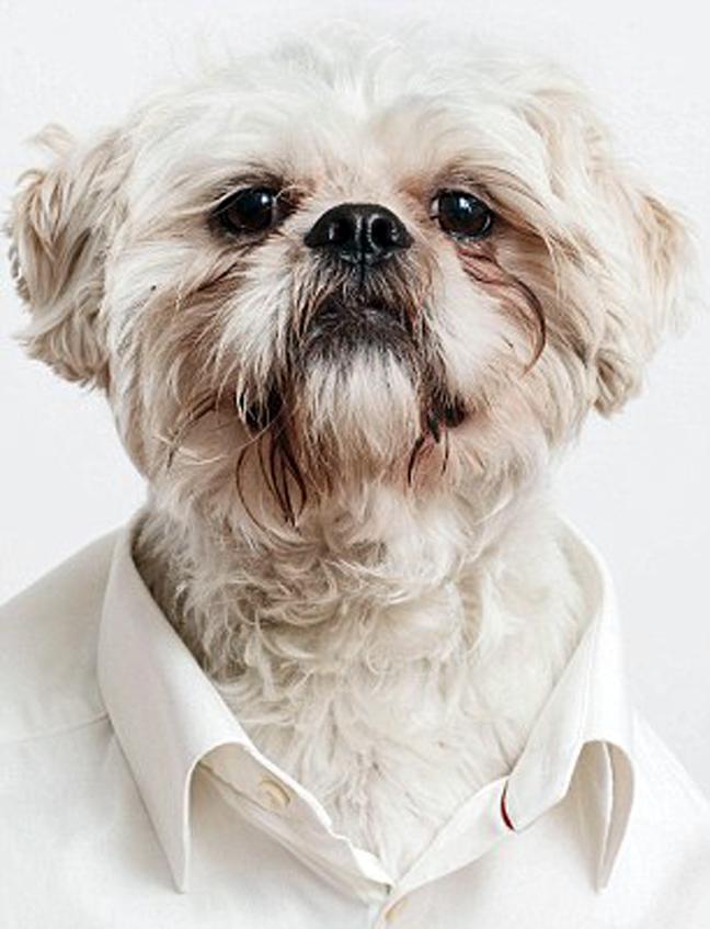 Белая рубашка галстук дорогой песня 11