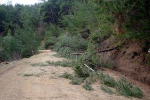 Προς παράταση για τις αντιρρήσεις επί των αναρτημένων δασικών χαρτών