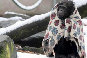 Πίθηκοι τυλιγμένοι με κουβέρτες προστατεύονται από το κρύο