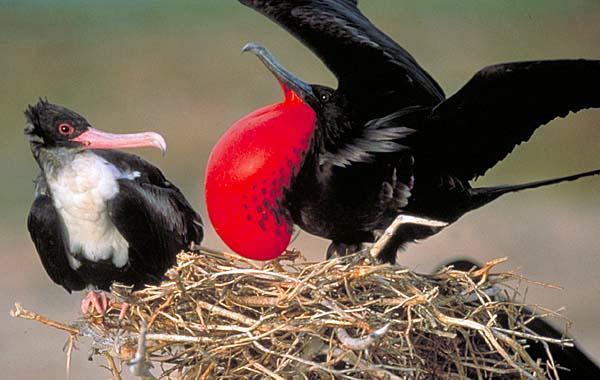 μαύρο πουλί σε μικροσκοπικό μουνί