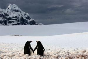 Ζευγάρι θηλυκών πιγκουίνων θα αναθρέψει το πρώτο «άφυλο» πιγκουινάκι