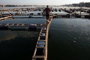 Πρόγραμμα προώθησης των ψαριών ιχθυοκαλλιέργειας
