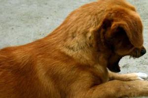 «Σταματήστε να πουλάτε ζώα»