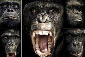 Χιμπατζήδες και άνθρωποι είναι γεννημένοι δολοφόνοι