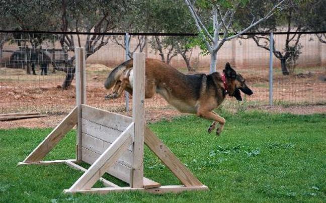e46c0969263d «Η τιμή για την εκπαίδευση των σκύλων αρχίζει από τα 600 με 800 ευρώ για  διάστημα περίπου τριών μηνών. Η τιμή όμως διαμορφώνεται ανάλογα με το ...