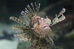 Τα ξενικά είδη κοστίζουν στους Ευρωπαίους 12 δισ. ευρώ ετησίως