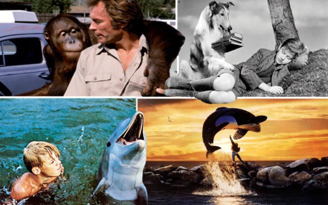 Η μοίρα γνωστών χολιγουντιανών ζώων