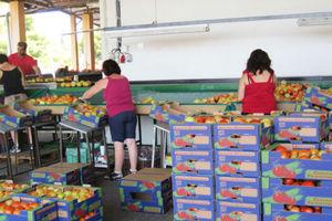 Αγροτικά προϊόντα το 41,5% των εξαγωγών στη Ρωσία