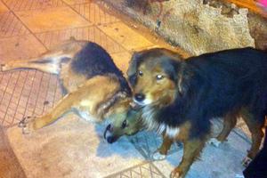 Αναζητούν σπίτι για σκύλο που ήθελε να σώσει τη φίλη του