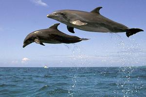 Κάθε δελφίνι έχει το δικό του όνομα