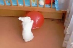 Το κουνέλι και το μπαλόνι