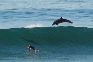 Δελφίνια κάνουν ακροβατικά πάνω στα κύματα