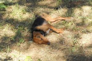 Επιχείρηση εξόντωσης κυνηγόσκυλων και λύκων