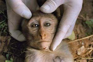 Η Ευρώπη βάζει τέλος στα πειράματα σε ζώα