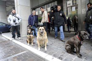Στα Μέγαρα ένα από τα τρία σκυλιά που «ενόχλησαν» την τρόικα