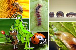 Τα «ζόμπι» του κόσμου των εντόμων