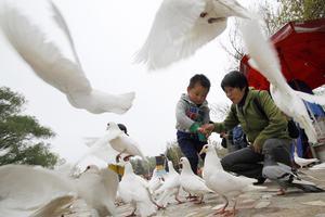 Κλειστά τα καταστήματα ζωντανών πουλερικών στη Σανγκάη