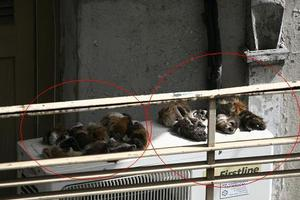 Προβιές σκύλων σε μπαλκόνι στην Κυψέλη