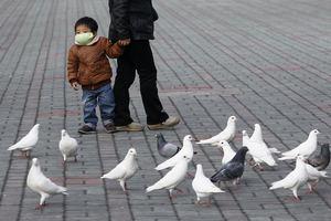 O H7N9 δεν μεταδίδεται από άνθρωπο σε άνθρωπο