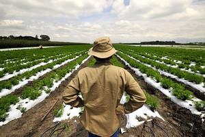 Αγρότες πήραν την τύχη στα χέρια τους και επενδύουν στη στέβια