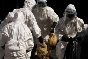 Εξαπλώνεται η νέα γρίπη των πτηνών στη Κίνα