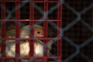 Η γρίπη των πτηνών μεταδόθηκε σε νέα επαρχία στην Κίνα