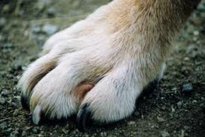 Με προϋποθέσεις τα ζώα συντροφιάς στα πάρκα