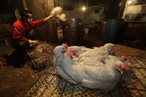 Νέο κρούσμα της γρίπης των πτηνών σε αγρόκτημα στη Βουλγαρία
