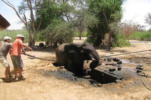 Επιχείρηση απεγκλωβισμού ελέφαντα
