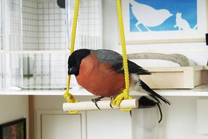 Μια έπαυλη για τα πτηνά της Μεγάλης Βρετανίας