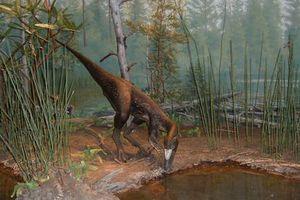 Δεινόσαυρος-ληστής ανακαλύφθηκε στη Μαδαγασκάρη