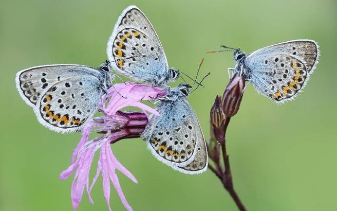 Πεταλούδες αναπαύονται σε πάρκο της Ιταλίας