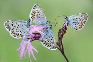Γιατί ο ουρανός της Κύπρου γέμισε πεταλούδες