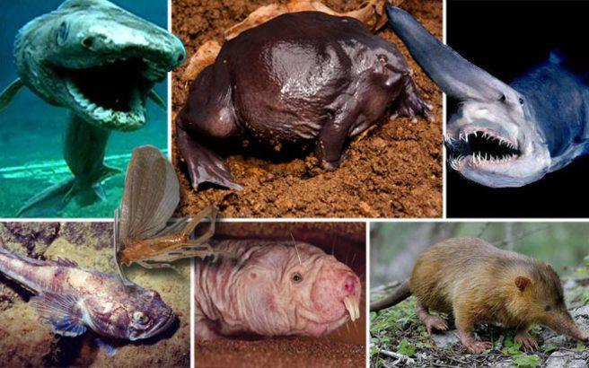 Ιδιαίτερα ζώα που λατρεύει να μελετά η επιστήμη