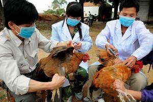 Με γρίπη των πτηνών αγρότισσα στο Πεκίνο