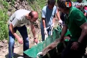 Διάσωση τραυματισμένης αρκούδας στα Γρεβενά