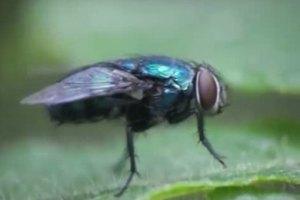 Προβληματίζονται και σκέφτονται οι μύγες