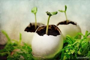 Συμβουλές για «πράσινο» Πάσχα από τη Greenpeace