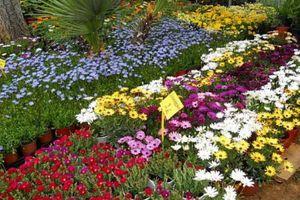 Πώς θα επηρεάσει η κλιματική αλλαγή τα λουλούδια