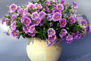 Πώς να κάνετε τα λουλούδια σας να κρατούν περισσότερο