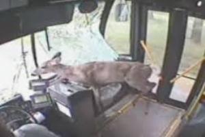 Ελάφι εισέβαλε σε λεωφορείο στην Πενσιλβάνια